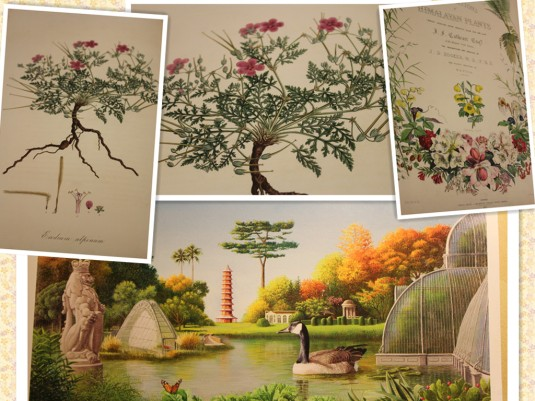 Beautiful paintings from Kew